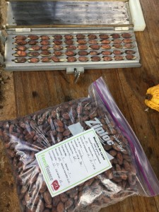 Cocoa Beans being tested