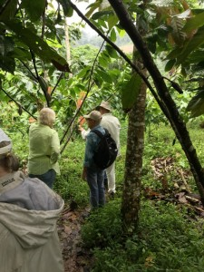 Touring the Cocoa Farm
